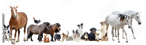 Fotobehang Paarden group of animals
