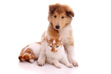 Katze und Hund sitzend