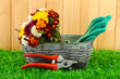 Secateurs with flowers in basket on fence background
