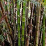 Fototapeta bamboo wood close up 02