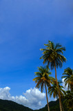 Tropical climate - Palm tree and blue sky. Trinidad poster