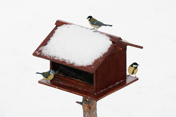 Bird feeder with tit birds during winter