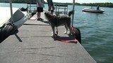 Dog Barking on Dock at Lake