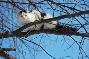 Beautiful cat on a tree in winter time.