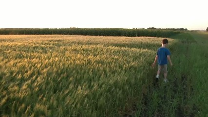 Boy Walking Next to Wheat Field at Sunset