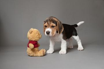 Poppy and toy
