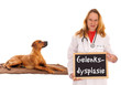 Tierärztin mit Hund und Schild - Gelenksdysplasie