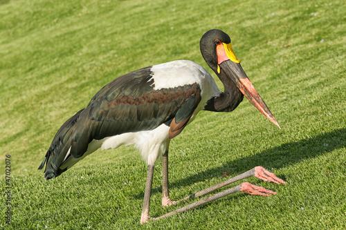 The kneeling crane