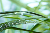 water drops on the green grass - 47024486