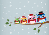 Fototapety owl family christmas greeting