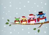 Fototapety owl family christmas greeting
