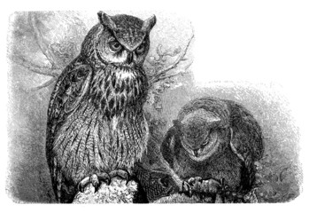 Eule - Chouette - Hibou - Owls