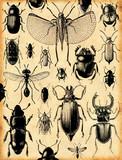 fond insectes rétro