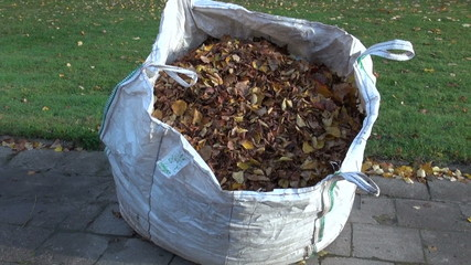 big sack of autumn dried leaves in city park