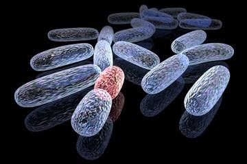 Mutated bacteria