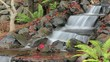 Timelapse of Waterfall in Garden in Late Autumn