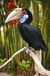 birв toucan