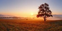 """Постер, картина, фотообои """"Alone tree on meadow at sunset with sun and mist - panorama"""""""