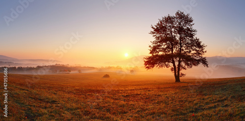 Foto op Canvas Weide, Moeras Alone tree on meadow at sunset with sun and mist - panorama