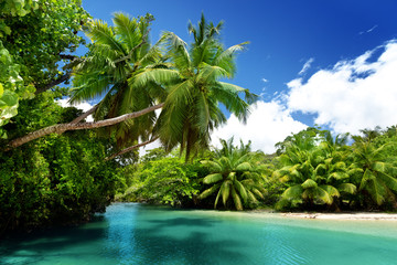 lake and palms, Mahe island, Seychelles
