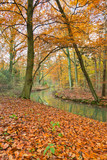 Autumn forest with river.