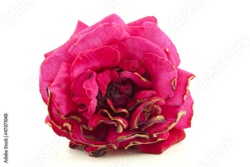 Withered rose 2