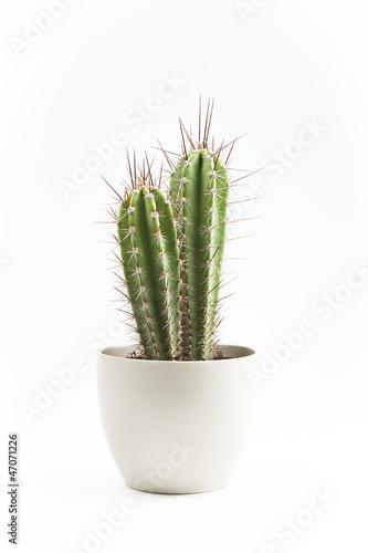 Fotobehang Cactus cactus en macetero