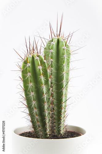 Detalle de cactus en macetero