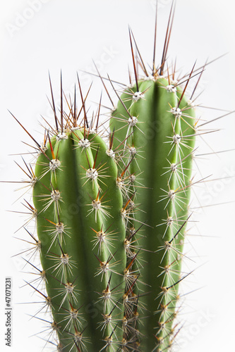 Foto op Canvas Cactus Cactus con espinas