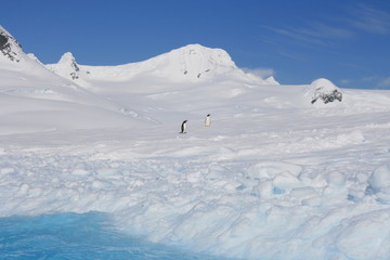 Antarctic landscape with penguins