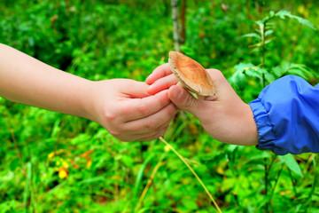 Mushroom in Hand