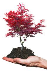 Baum auf Hand