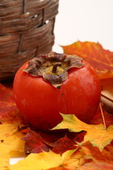 Frutto d'autunno