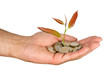 sapling growng from pile of coins