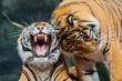 Постер, плакат: Sumatran Tigers
