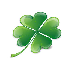 Clover leaf with drops of water on a white background