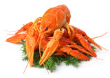 Heap of red lobsters with dill garnish isolated on white