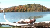 Man Suntanning on Driftwood in Fall Season