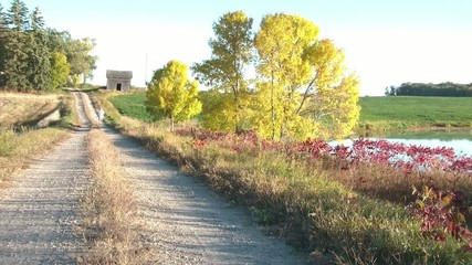 Jogging in Fall Season on Dirt Road