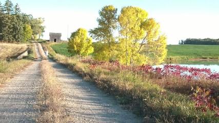 Jogging in Fall Season on Dirt Road
