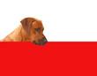 Hund guckt über ein Schild