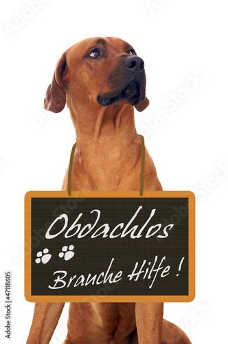 Hund mit Schild um den Hals
