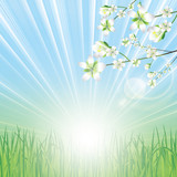 Fototapety Beautiful spring background