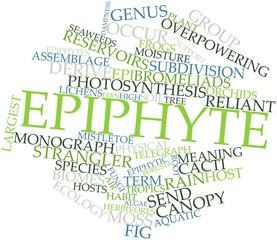 Word cloud for Epiphyte