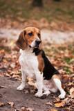 Fototapeta zwierzę - szczenię - Zwierzę domowe