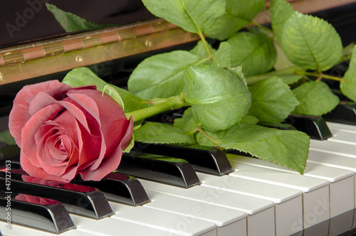 Red Rose on the Keyboard of a Piano