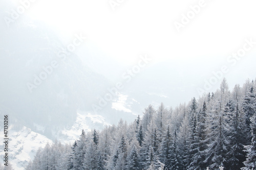 forest in snow - 47130206