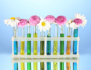 flowers in test tubes isolated on blue background