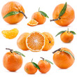 Collections of Tangerines with green leaves and water drops