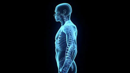 Transparent Human Body on black background, loop rotation